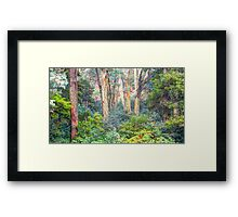 Colours - Laurel Hill, NSW - The HDR Experience Framed Print