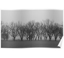 Pecan Trees In Fog Poster
