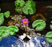 Tranquility - Lotus Flower Koi Pond by Sharon Cummings by Sharon Cummings