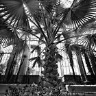 Palm Tree : Adelaide Botanical Gardens Conservatory. by Nick Egglington