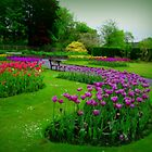 A colourful garden... by shelleybabe2