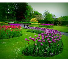 A colourful garden... Photographic Print