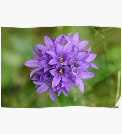 lavender flower purple macro D800 Poster