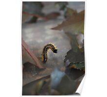 Caterpillar Macro in Leaves  Poster
