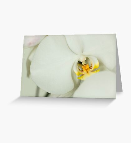 Moon Orchid Landscape 1 Greeting Card