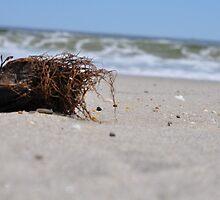 Beach . . . by Cindy Rubino