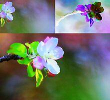 In Bloom by Augustina Trejo