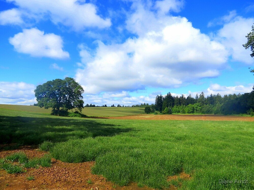 Finally....Green. Outside Salem, Oregon by Diane Arndt