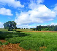 Finally....Green. Outside Salem, Oregon by trueblvr
