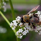 Spring Bee - Ault Park Cincinnati by Tony Wilder