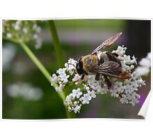 Spring Bee - Ault Park Cincinnati Poster