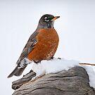 Robin in the Snow by Kim Barton