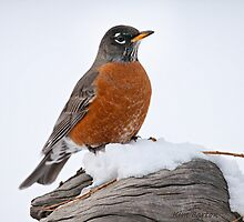 Robin in the Snow by Kim Barton