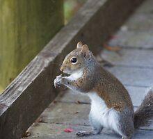 Squirrel by Scott Dovey