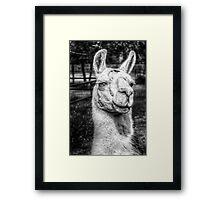 HDR B&W Llama Framed Print