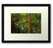 Forest Cascade Framed Print