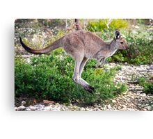 Hop to it. Canvas Print