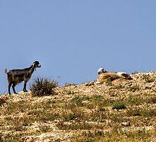 Looking for a black sheep by Birgit Van den Broeck