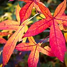 Autumn Leaves 07/06/2013 by pennyswork