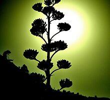 Century Plant  by JoAnn Glennie