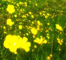 Buttercup Meadow by thepicturedrome