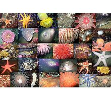 Pacific Northwest Marine Life Collage (landscape) Photographic Print