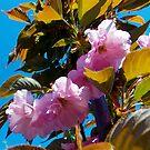 1547-PINK FLOWERS by elvira1