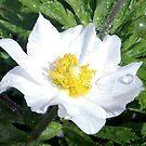1551-beautiful flowers by elvira1