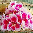 1555-beautiful geranium by elvira1