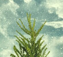 winter FIR  Sticker