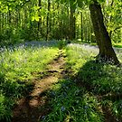 Bluebells in Spring Crag Wood by Simon Bowen