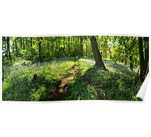 Bluebells in Spring Crag Wood Poster