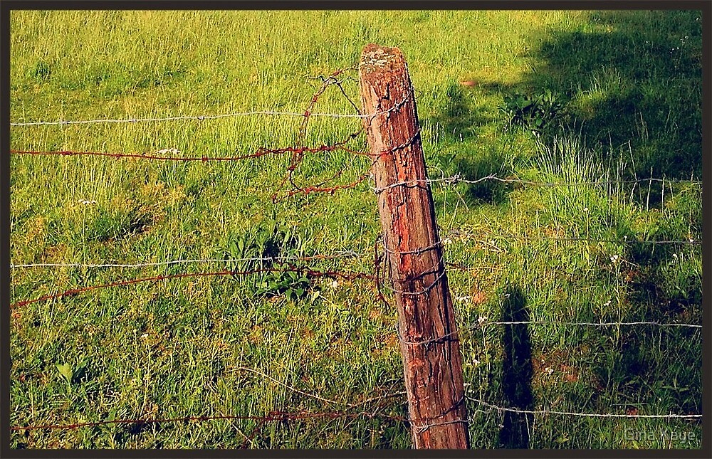 Barbed Wire Fence Post by Gina Kaye