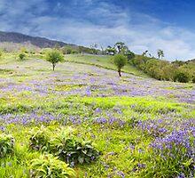 Bluebell Hillside Panorama by Richard McAleese