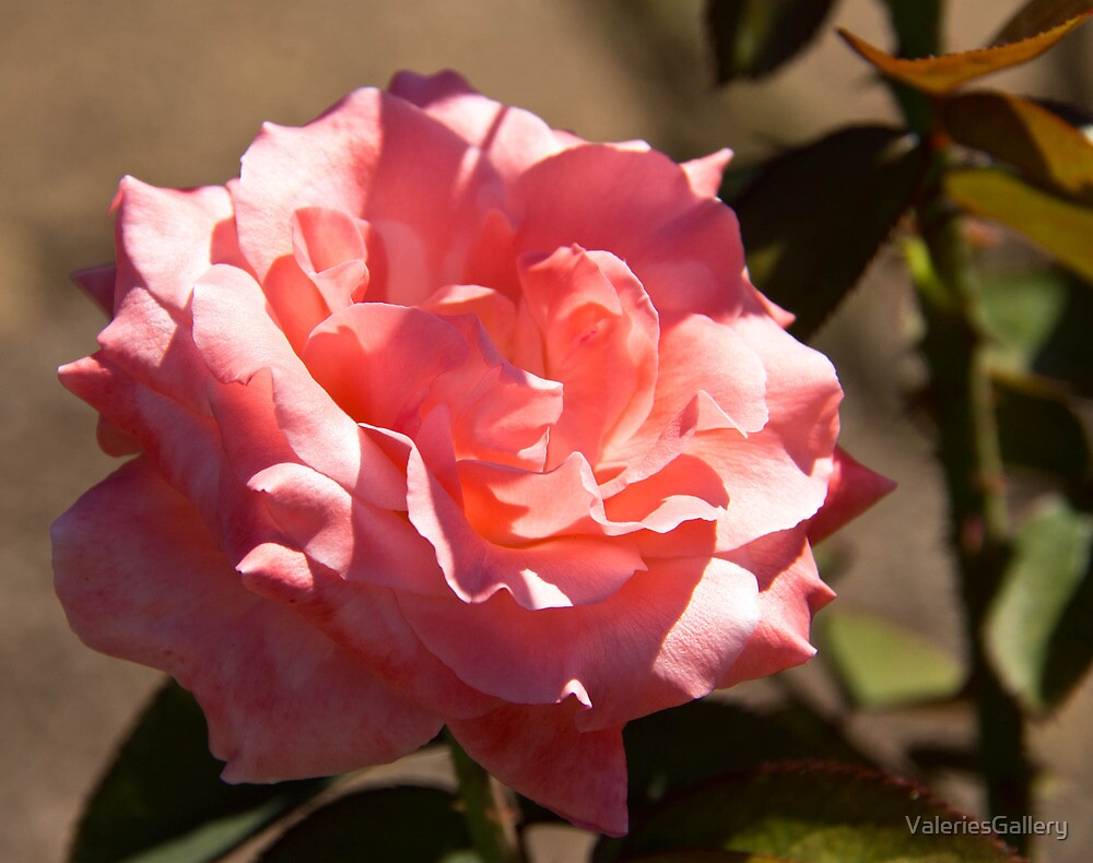 Pink Rose Blossom by ValeriesGallery