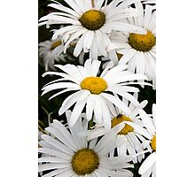wild Irish daisies Photographic Print