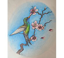 Hummingbird and the blossom Photographic Print