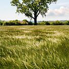 A moving sea of Barley by Richard Flint