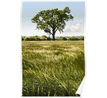 A moving sea of Barley Poster