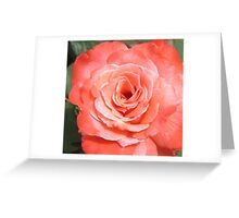 In my rose garden Greeting Card