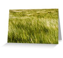 Light and dark patterns of barley Greeting Card
