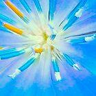 Blue Wild Flower by kahoutek24