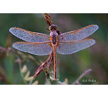 Orange Dragon Photographic Print