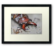 Bug... Framed Print