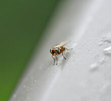 Fly... by crubino12