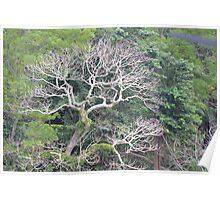 Vanuatu - tree Poster