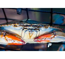 Crab... Photographic Print