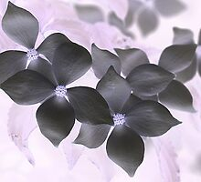 Mystical Dogwood Flowers by Monnie Ryan