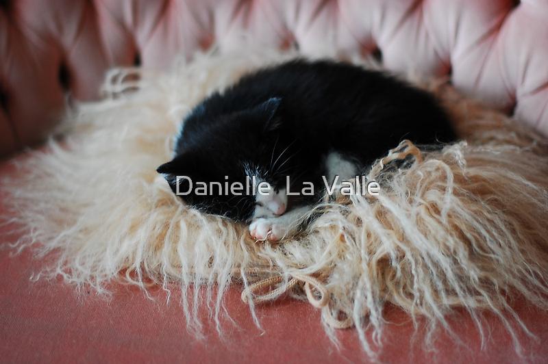 Mizu (Sleeping) by Danielle  La Valle