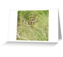 Dragon Fly... Greeting Card
